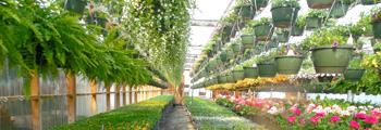 Welke branches? Bijvoorbeeld duurzame tuinbouw met bloemen en planten