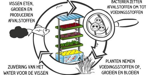 Aquaponics workshop cursus lesmateriaal docenten onderwijs klas aquaponis systeem zelf bouwen MMENR